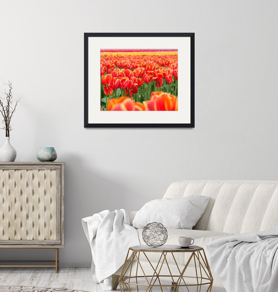 """""""Sunning the Tulips""""  (2014) by twostarphotography"""