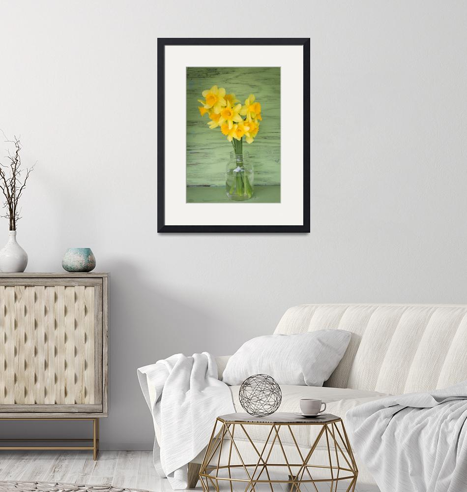 """""""Daffodils on Your Honor""""  (2018) by wendlandphotography"""