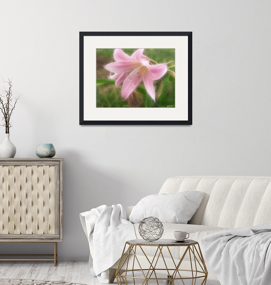 """Pink Crinum Lilies 1 Angelic""  by ChristopherInMexico"