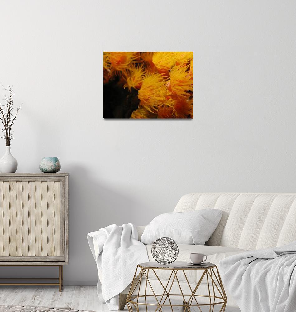 """""""Ocean Sunflower""""  (2010) by littlediver"""