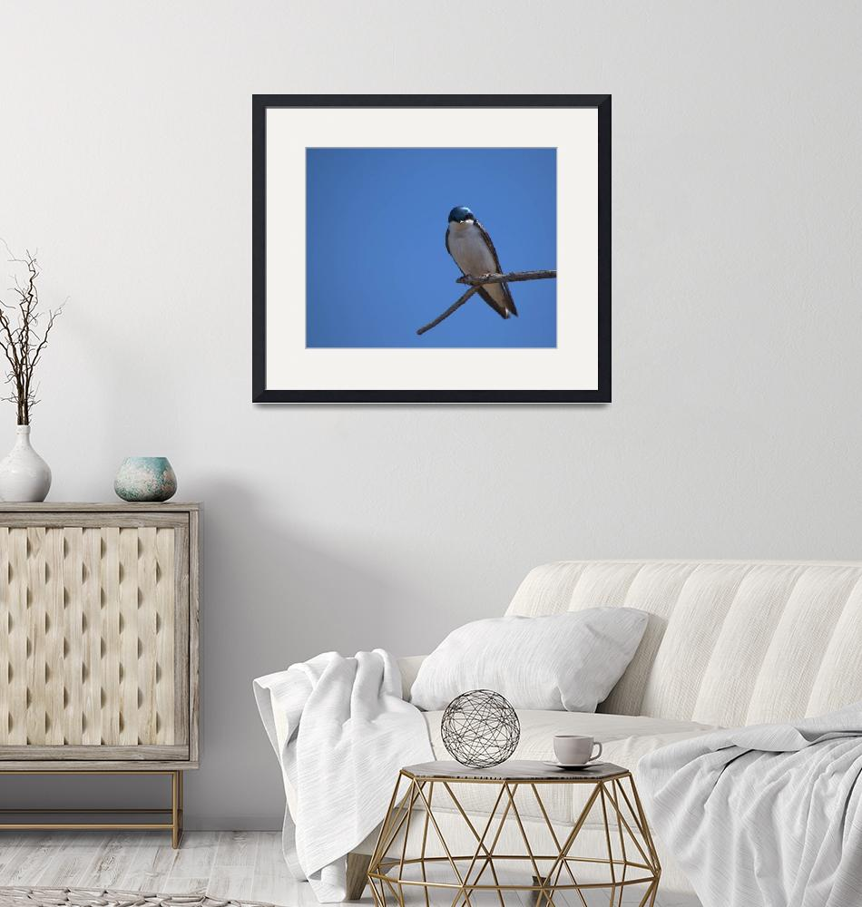 """""""Tree Swallow""""  (2018) by dirkseis"""