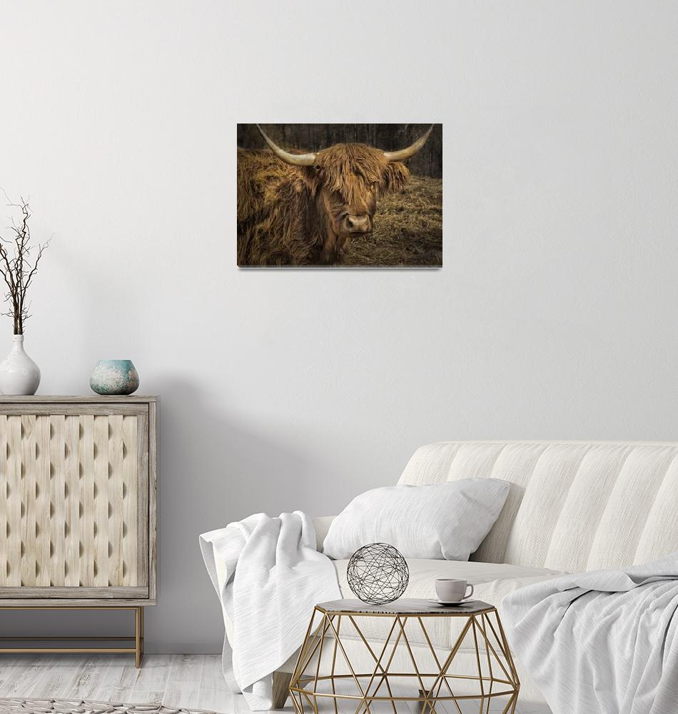 """Scottish Highland Cattle""  (2016) by WilshireImages"