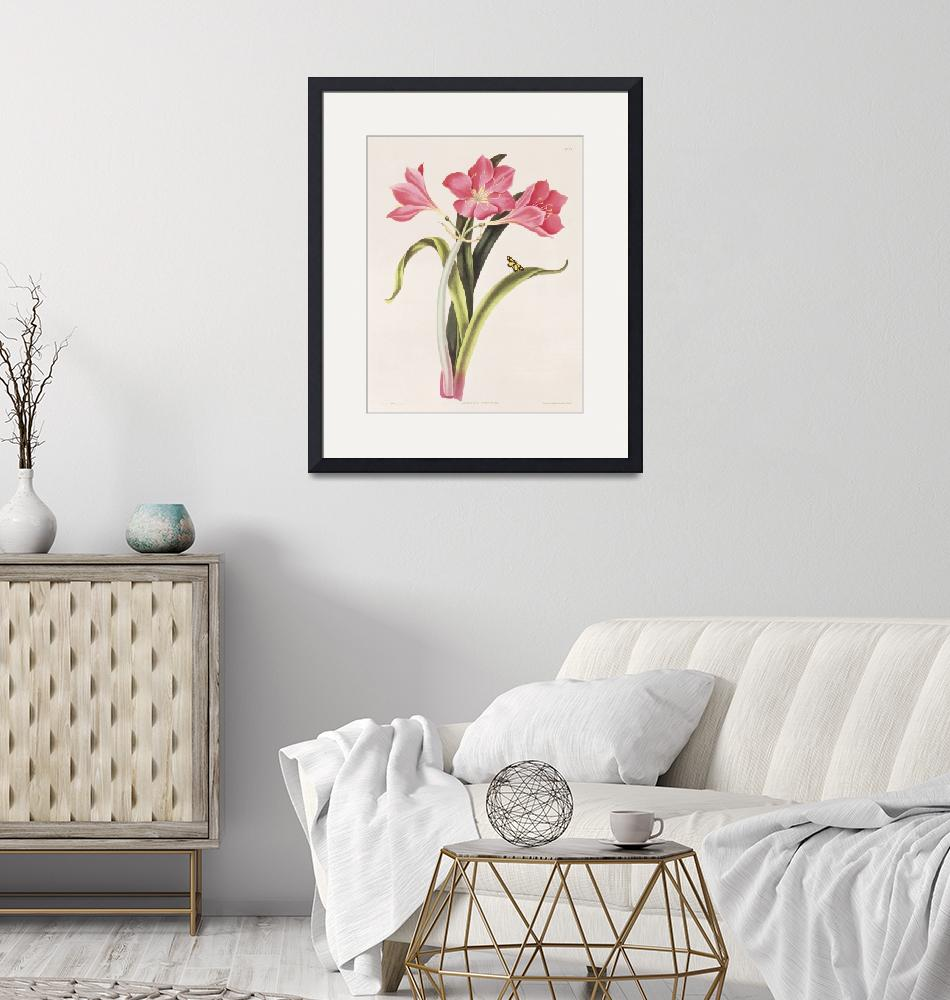 """""""Amaryllis Purpurea by Rober Havell""""  by fineartmasters"""