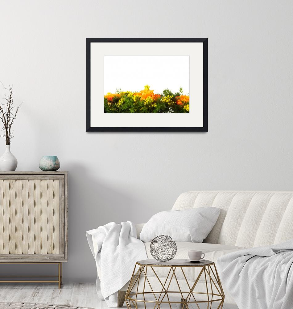 """Bouquet of orange roses, over white background""  by Piotr_Marcinski"