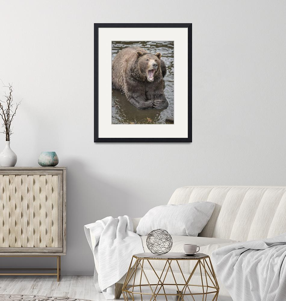 """""""Bear Yawning in Water""""  (2018) by SederquistPhotography"""