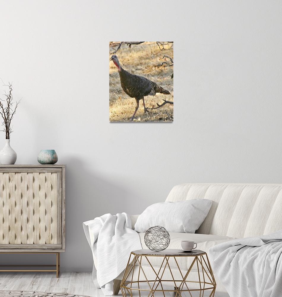 """""""Wild Turkey""""  (2008) by MindsEyeImagery"""