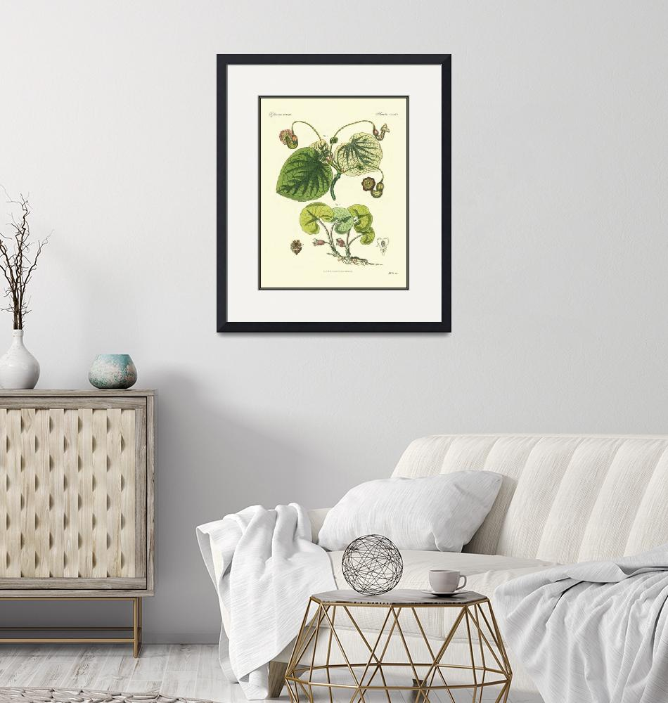 """""""Heberblume Haselwurz Pflanze Pflanzen plant engrav""""  by motionage"""