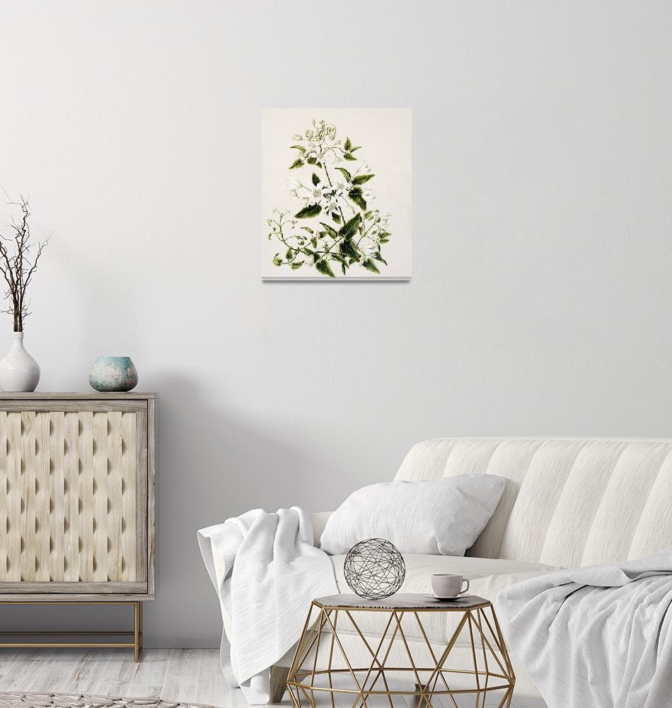 """Sarah Featon Art Framed Print""  by buddakats1"
