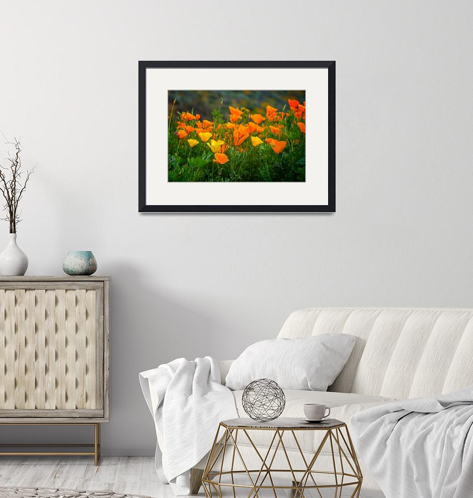 """""""California Poppies In Walker Canyon""""  (2019) by LynnBauer"""