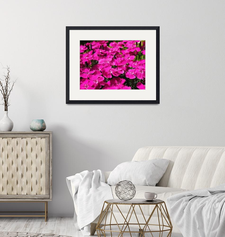 """""""Pink Dianthus Flowers""""  (2011) by rewards4life"""
