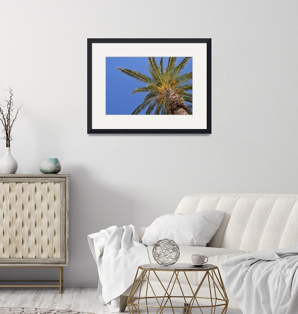 """""""Palm tree with blue sky""""  (2012) by creative_photography"""