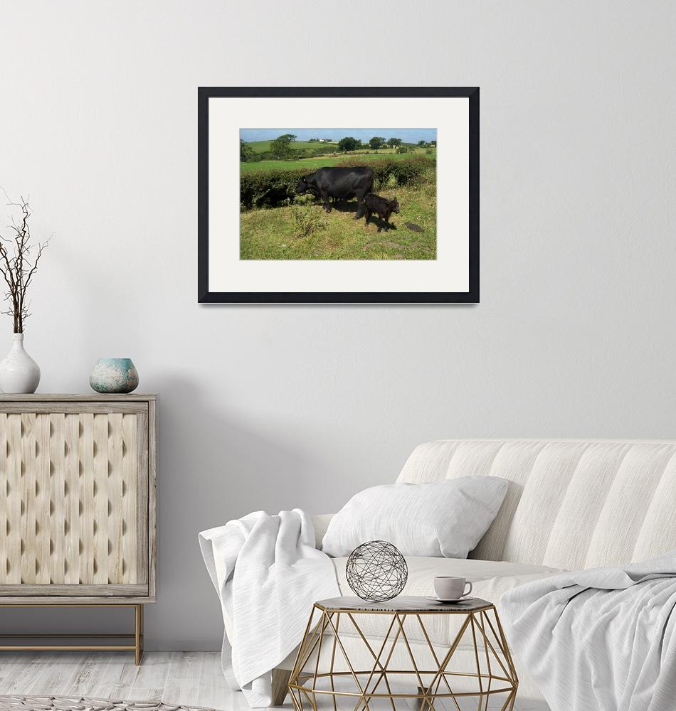 """""""Aberdeen Angus Cow and calf""""  by Kindurco"""