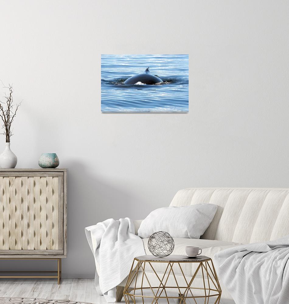 """""""Humpback Whale (7909)""""  (2008) by neilnathan"""