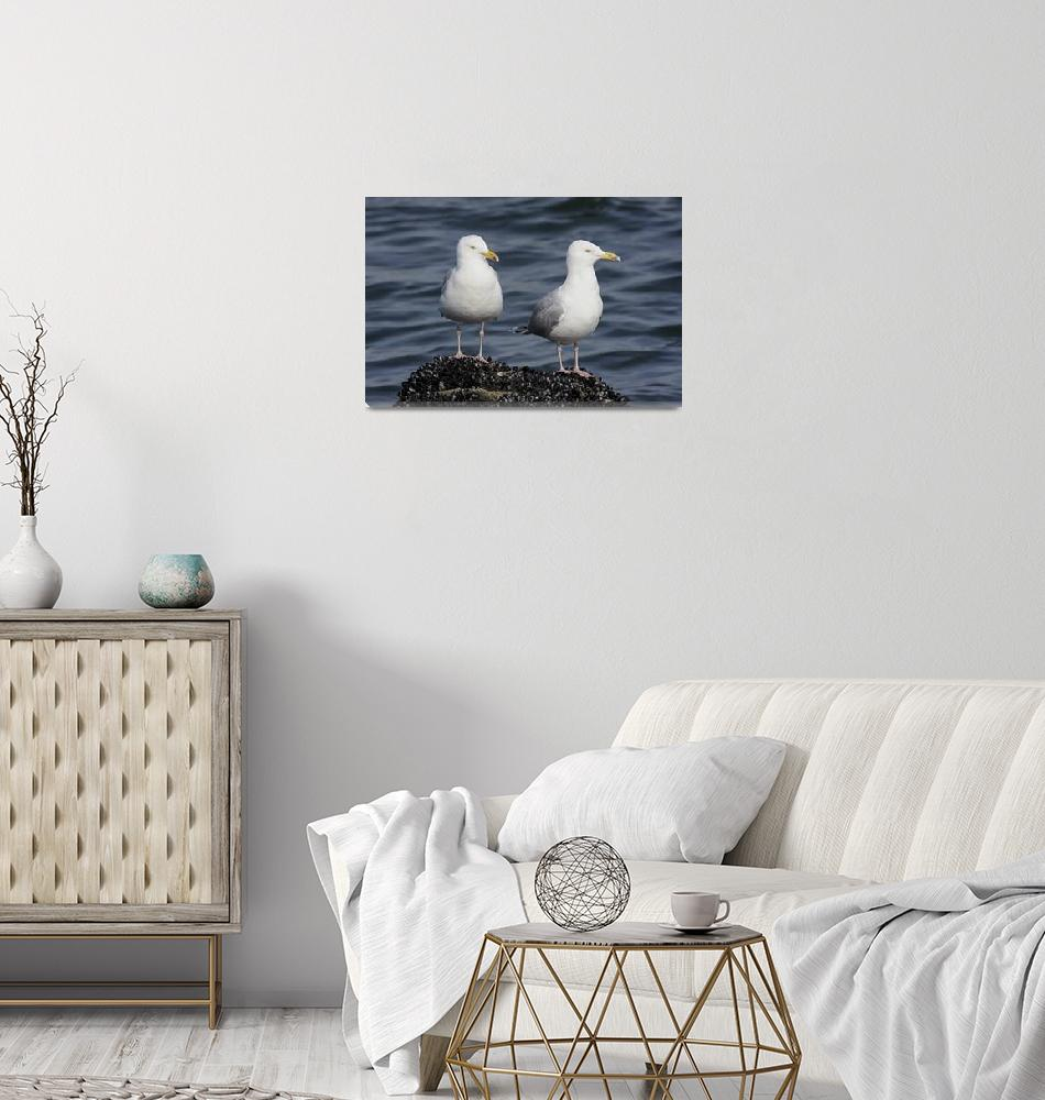"""Herring Gull Photograph""  by ArtLoversOnline"