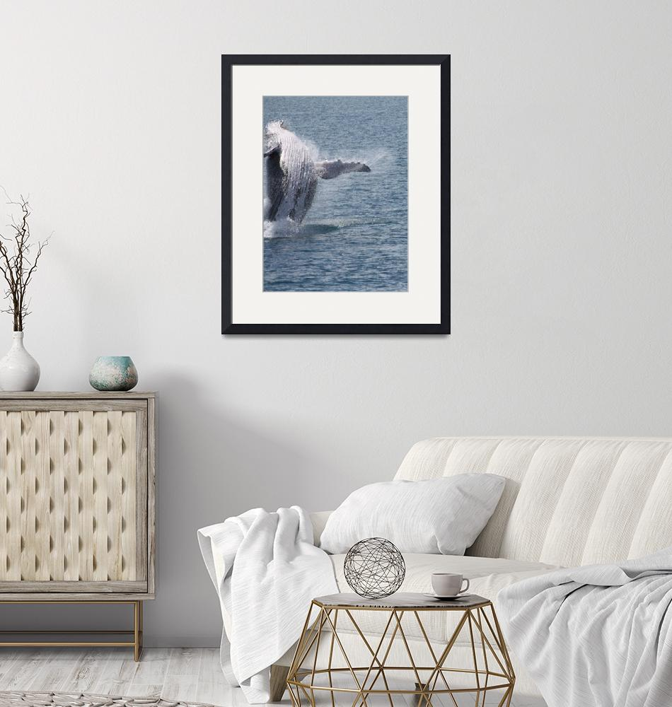 """""""NaP_ Whale Watching001""""  by nevilleprosser"""
