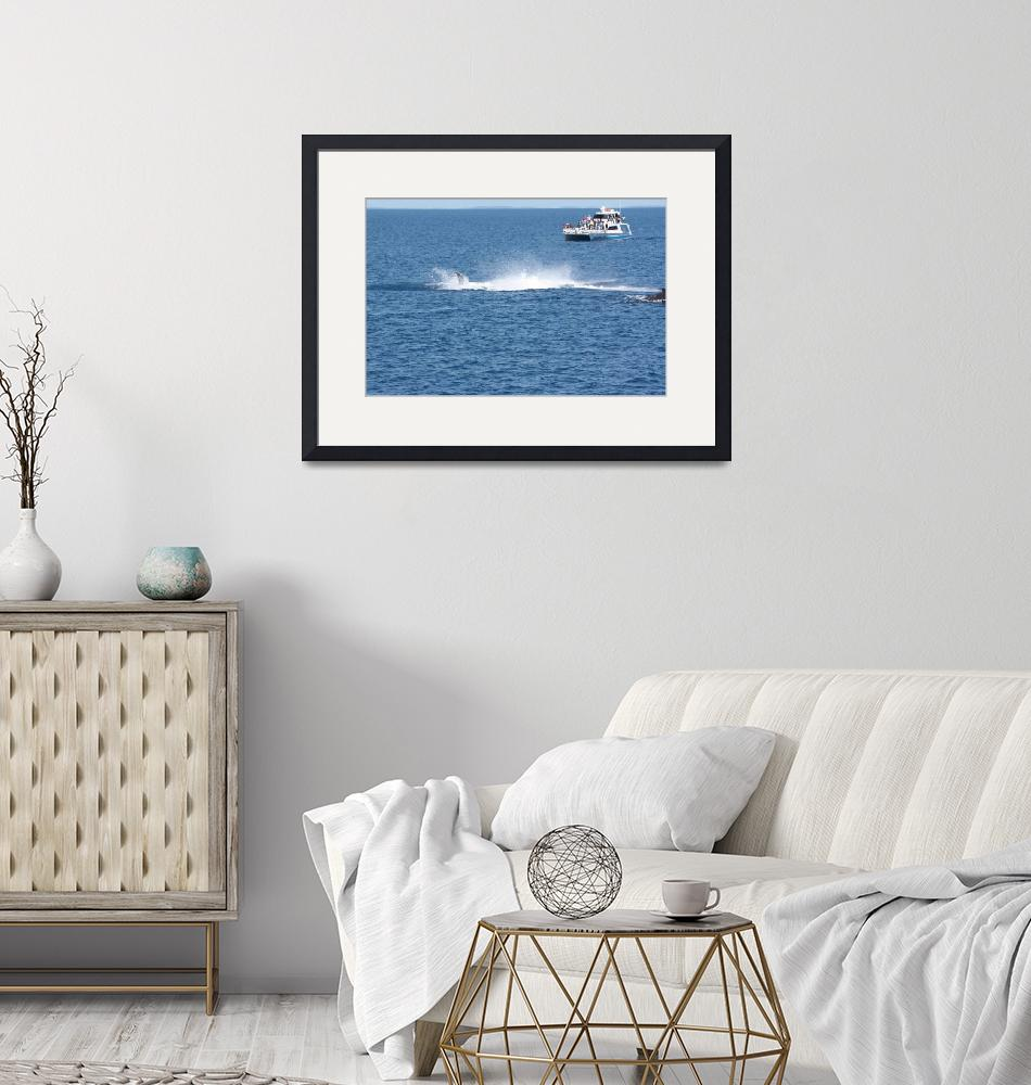 """""""NaP_ Whale Watching176a""""  by nevilleprosser"""