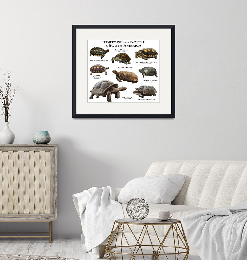 """""""Tortoises of North and South America""""  (2014) by inkart"""