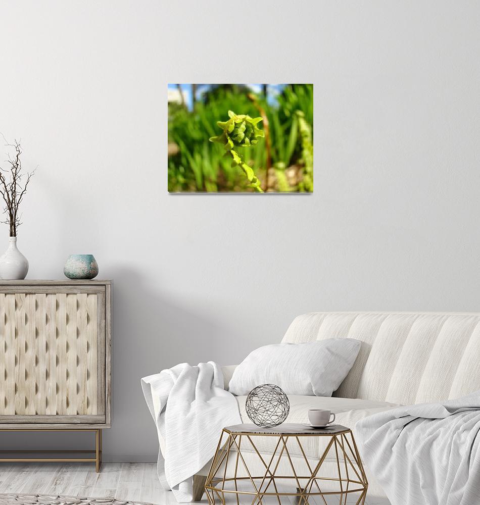 """Baby Fern Frond unfolding Ferns Art Prints Florest""  (2014) by BasleeTroutman"