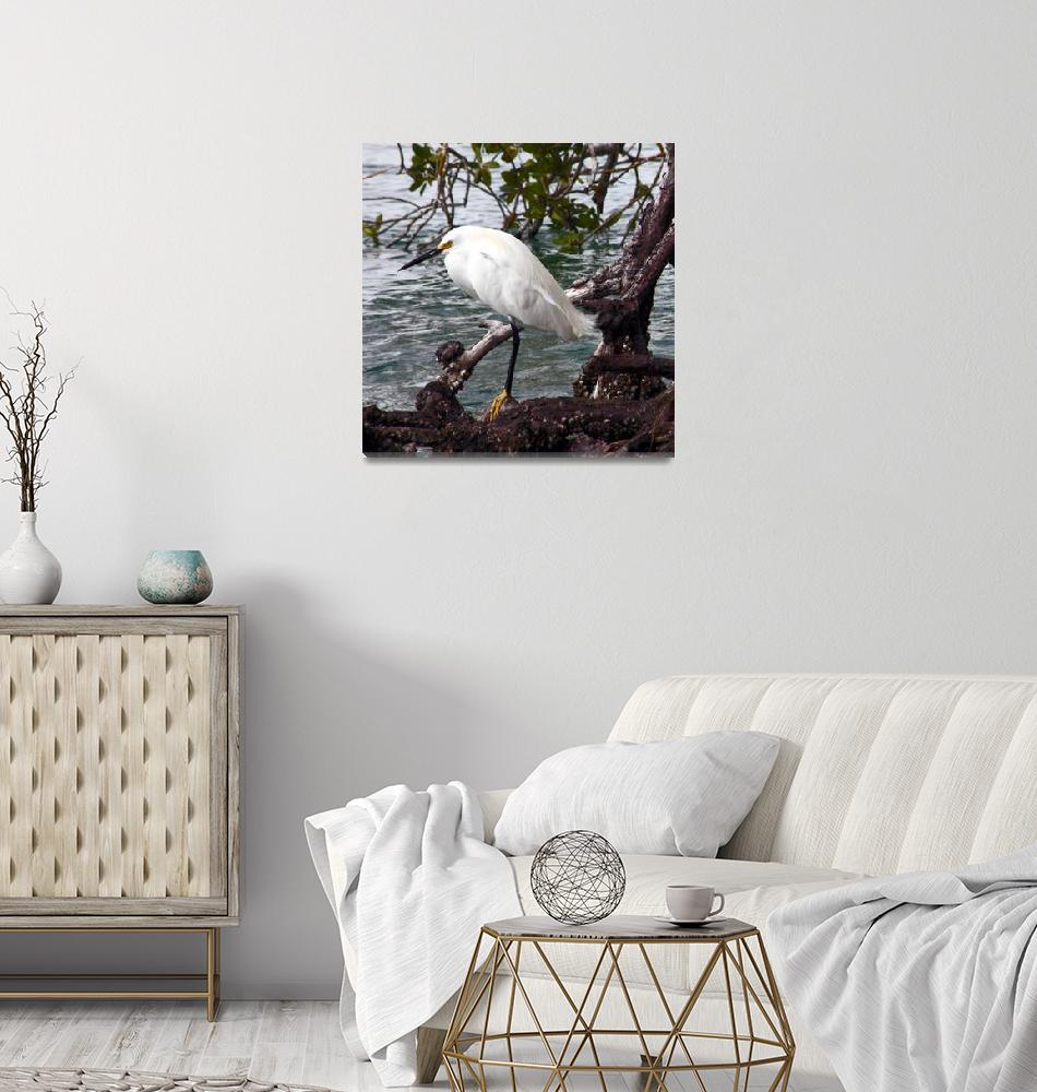 """Snowy Egret (Egretta thula)""  (2009) by shelshots"