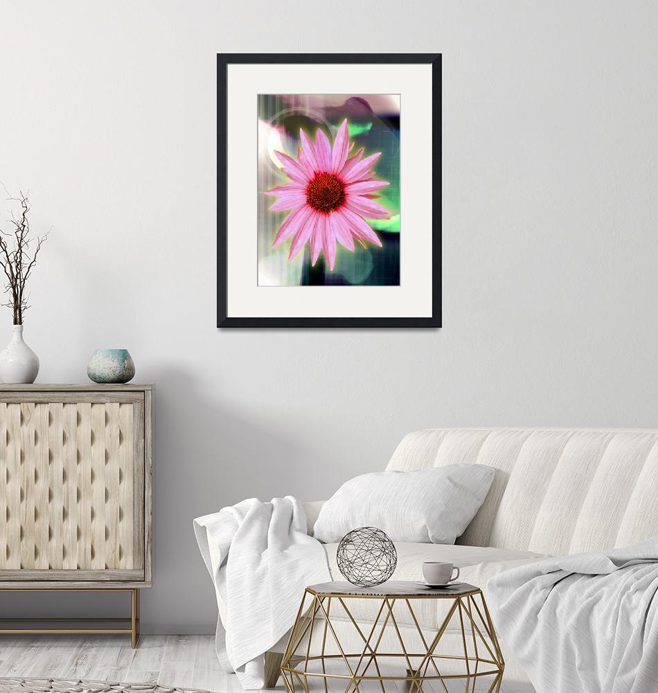 """""""Echinacea""""  (2008) by karmadreams"""