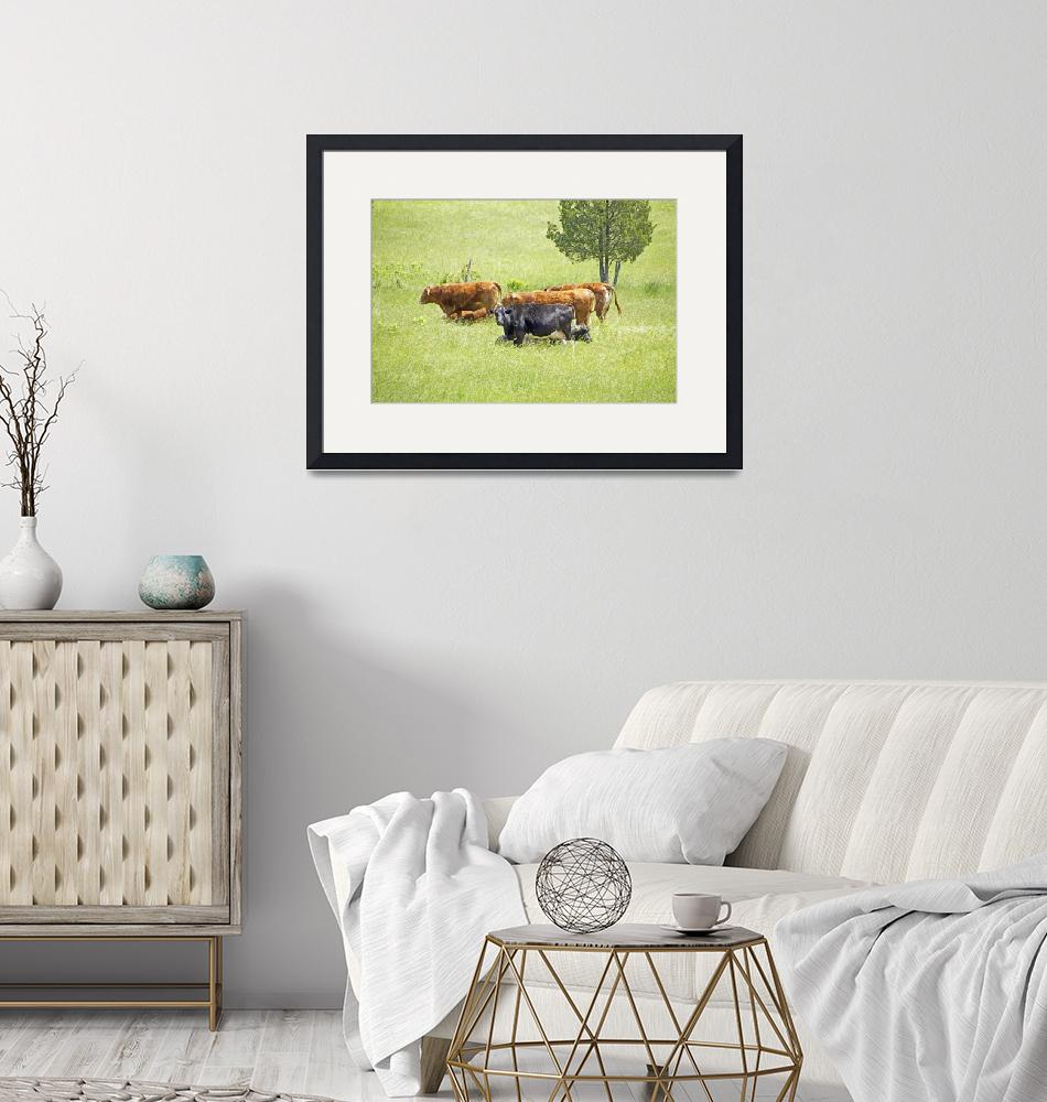 """""""Cows and Beeves In Summer Field""""  (2014) by MotherNature1"""