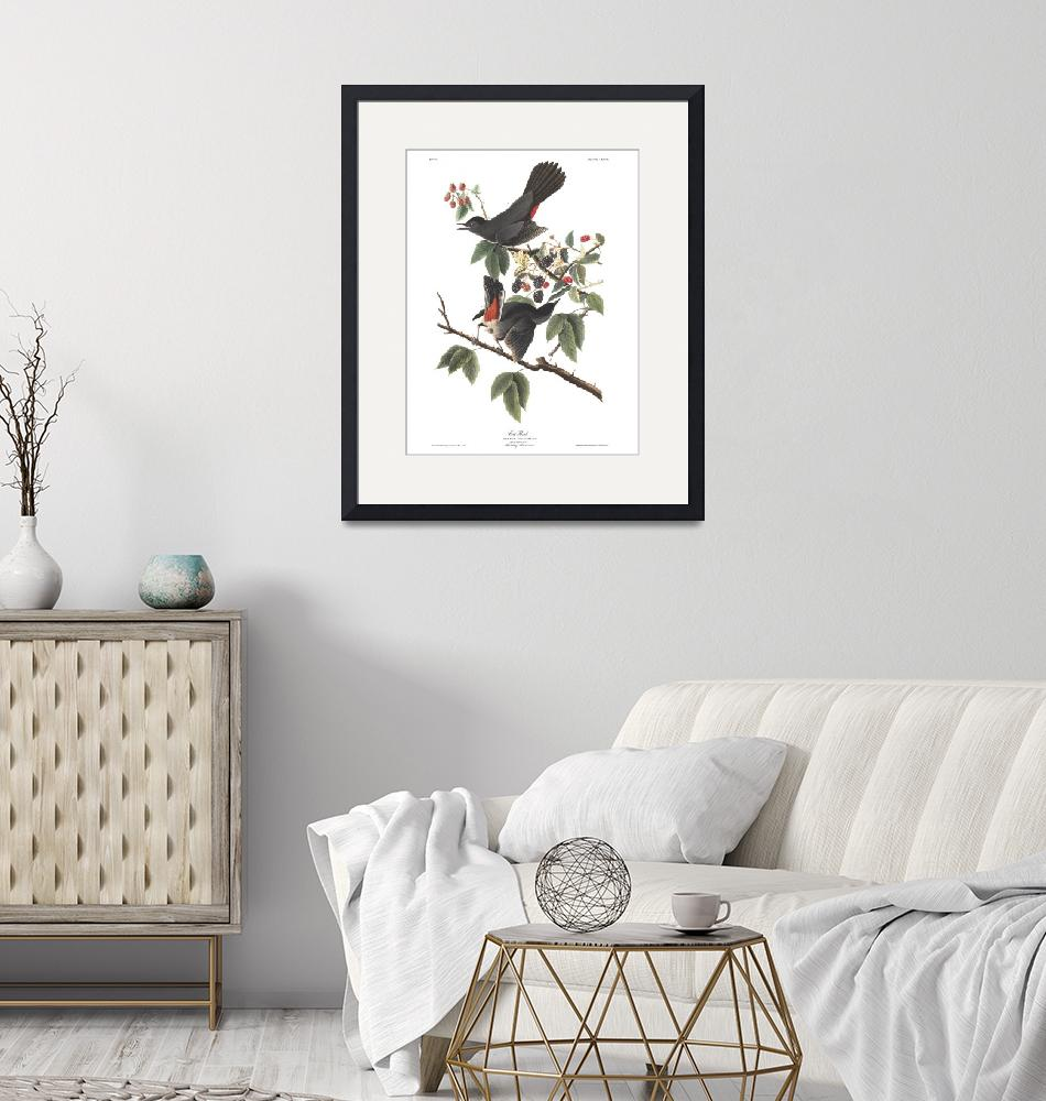 """Audubon Cat Bird, Plate 128"" by FineArtClassics"