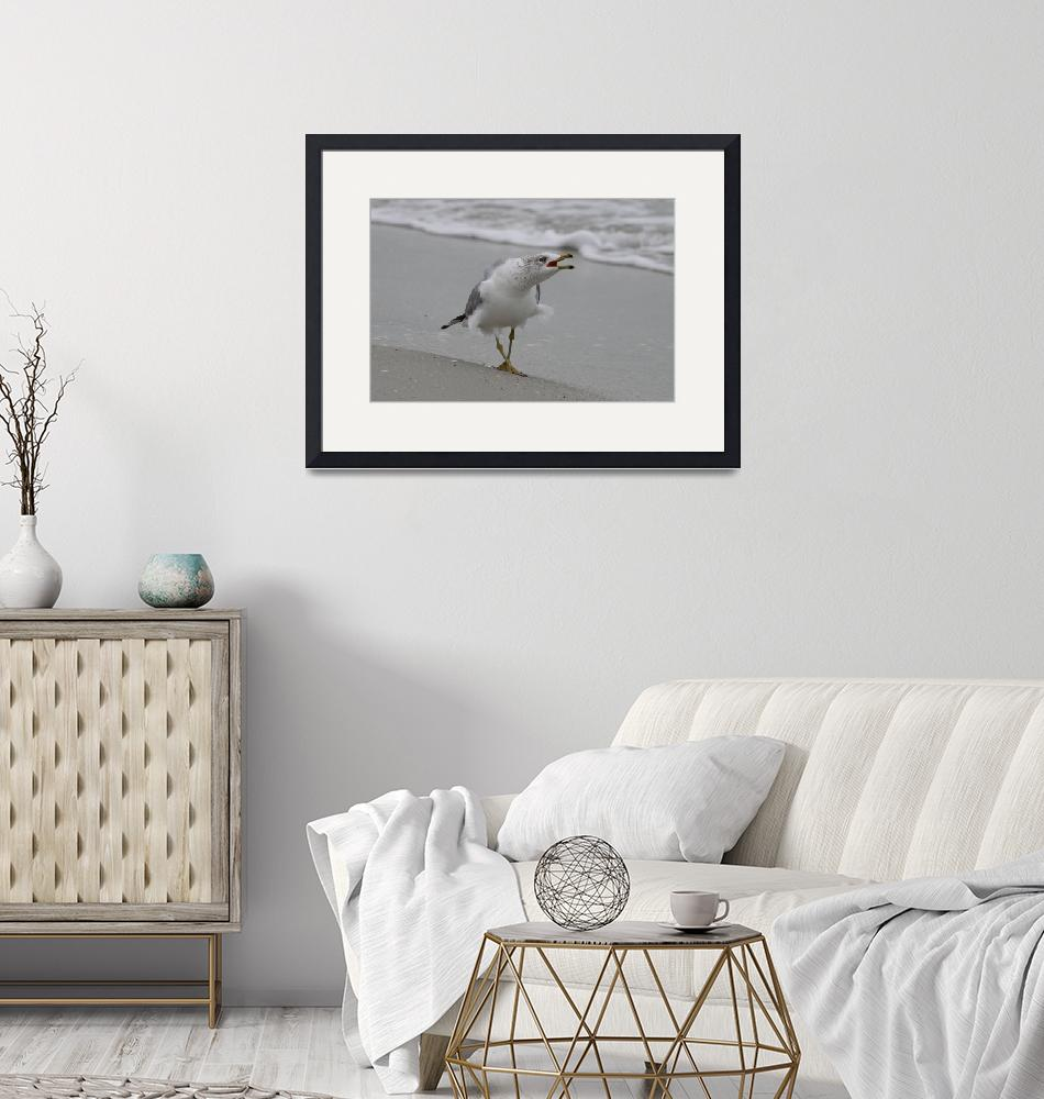 """Ring billed Gull""  (2010) by DoubleDPhotography"
