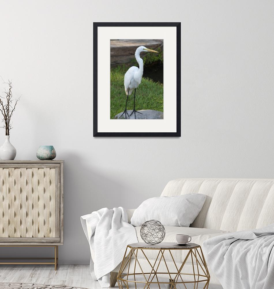 """""""Floridian Egret""""  (2010) by easyfigure"""