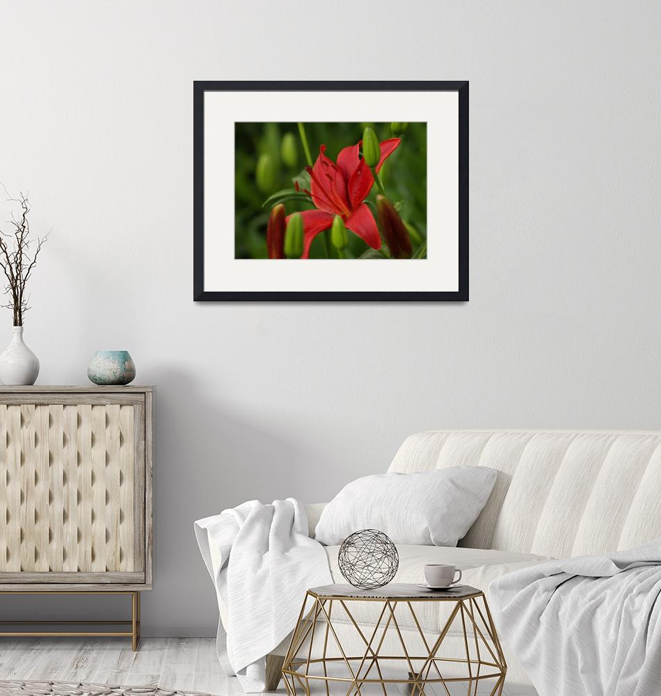 """""""Red Lily""""  by LiveInTheMoment"""