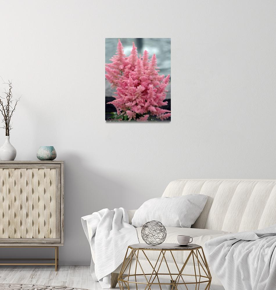 """""""Pink and Fluffy Flower""""  (2007) by NateLancer"""