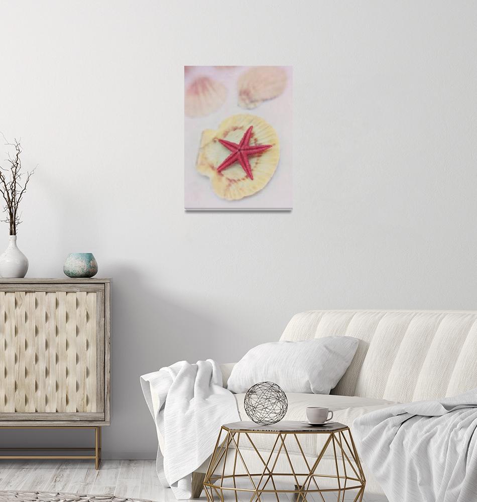 """""""little red starfish"""" by Piri"""