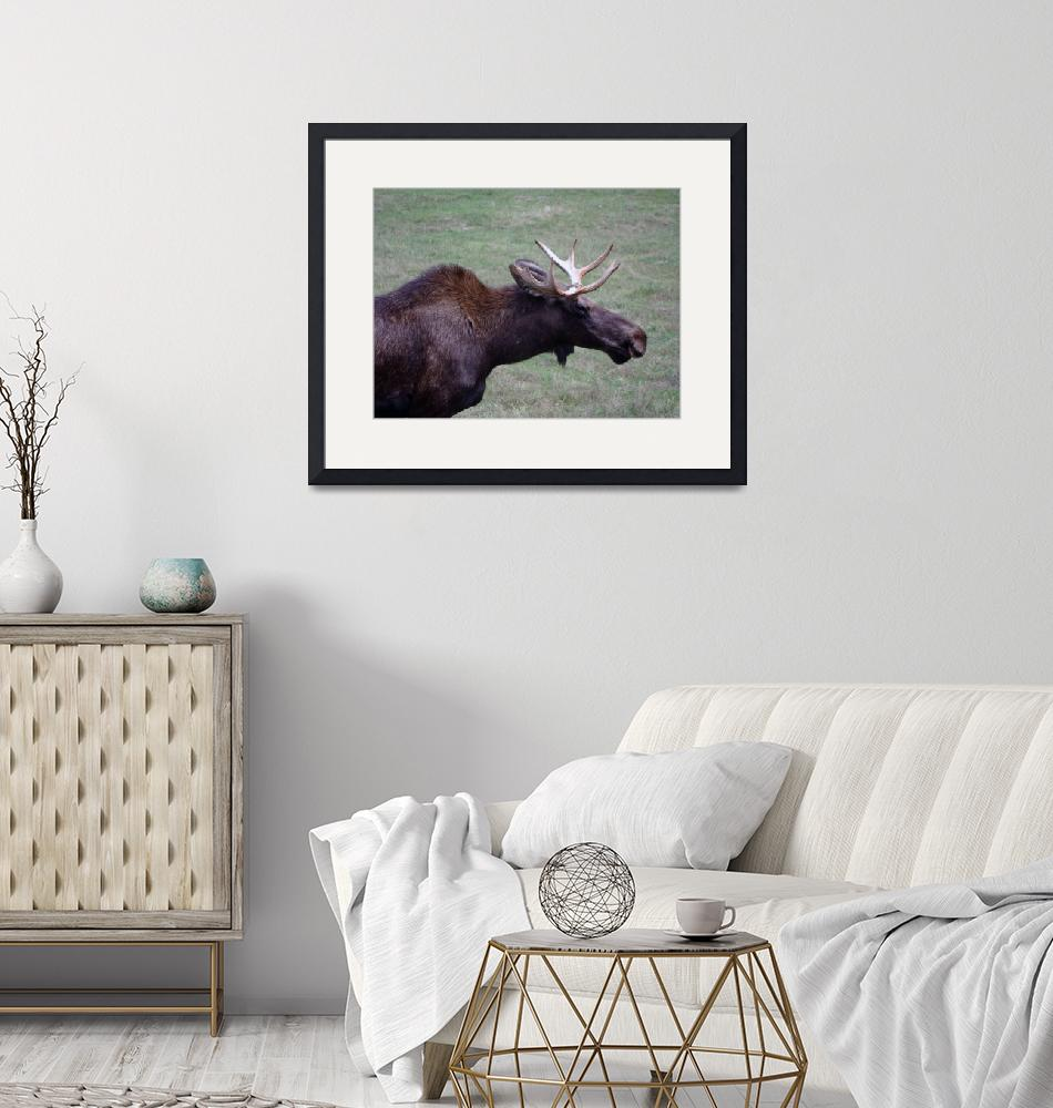 """""""Young Moose""""  (2009) by ArmyArt"""