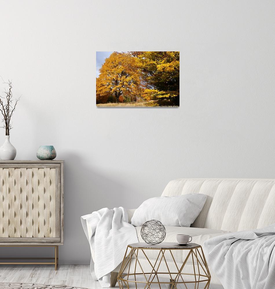 """""""colors of autumn""""  (2014) by bogfl"""
