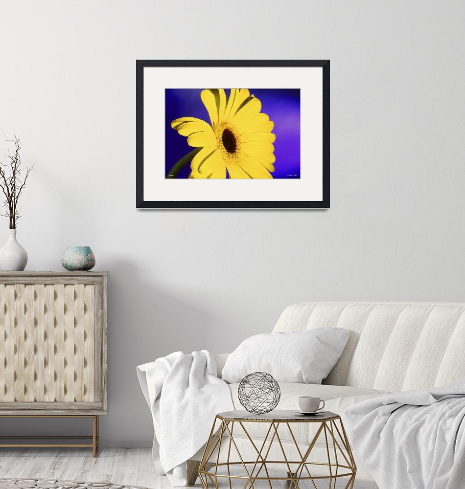 """""""F054-1 Bellis Daisy""""  (2015) by Williamcastner"""