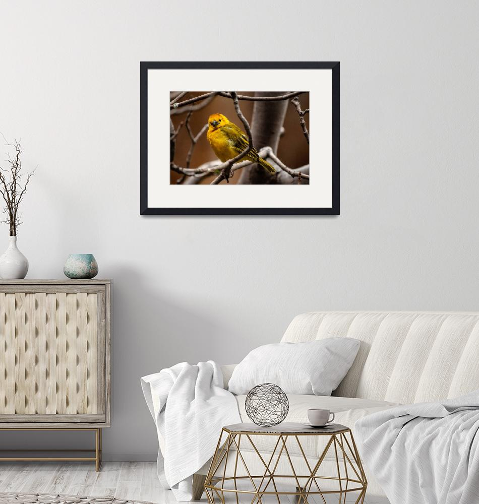 """""""Yellow Bird""""  (2019) by JeanniesPhotography"""