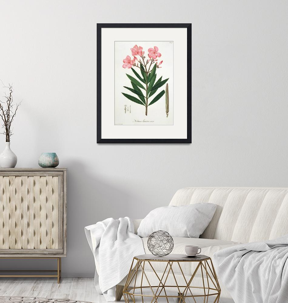 """""""Oleander from"""