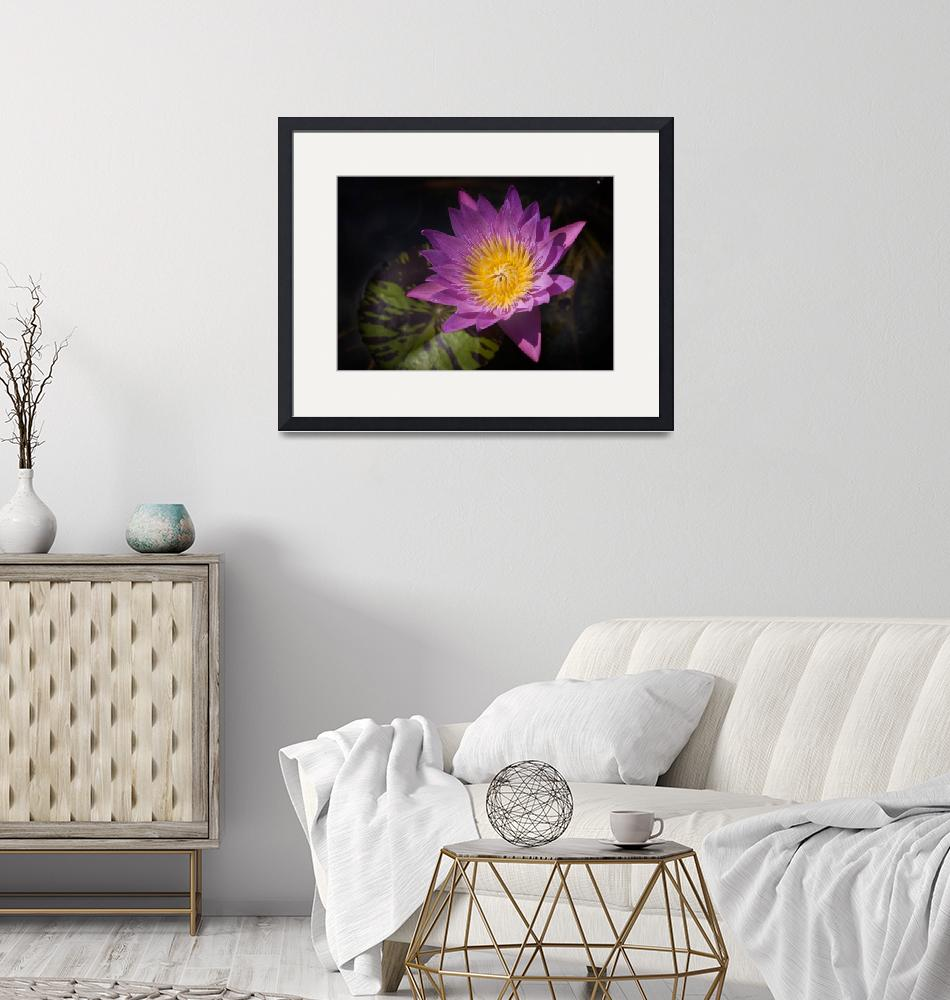 """""""Pink Water Lily""""  (2013) by JohnnyStevens"""