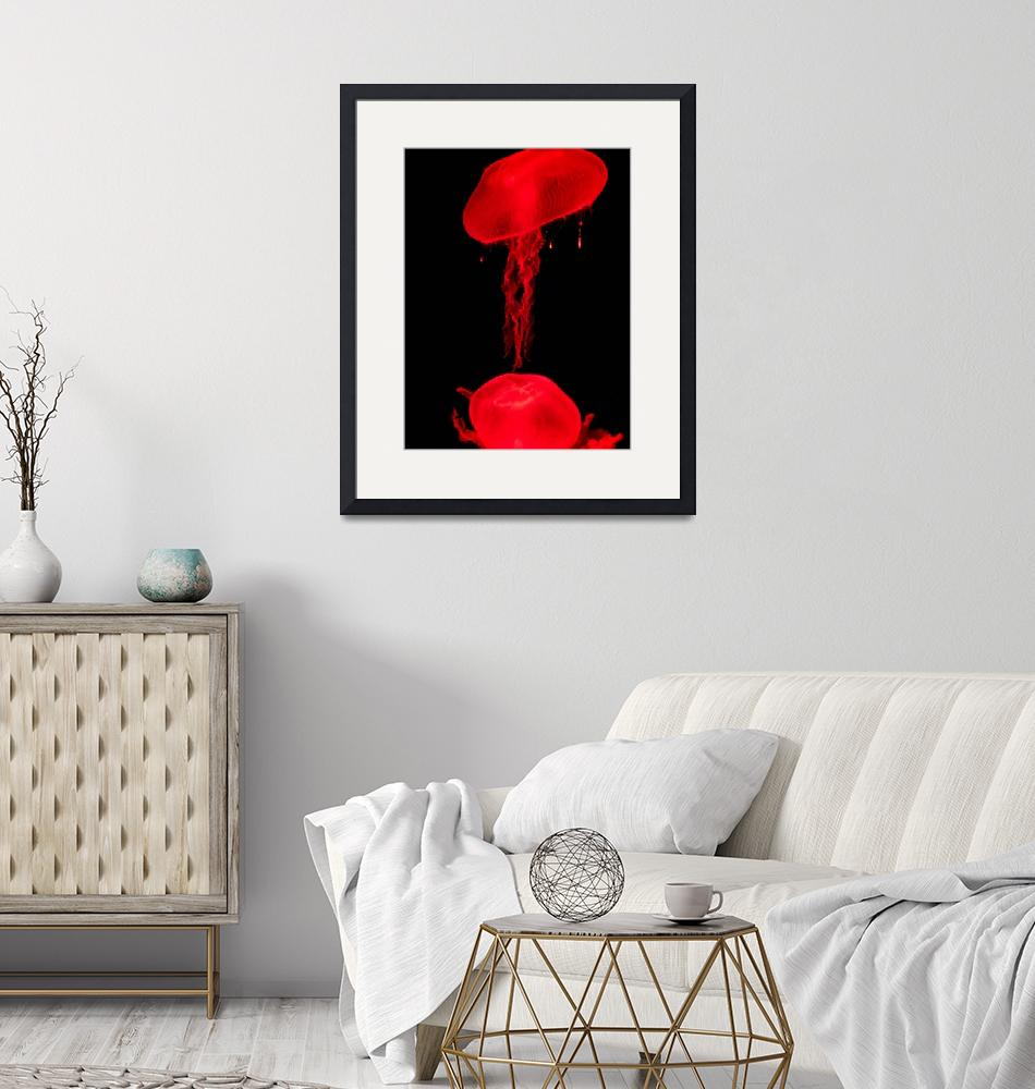 """""""Red Jellyfish""""  (2008) by drake"""