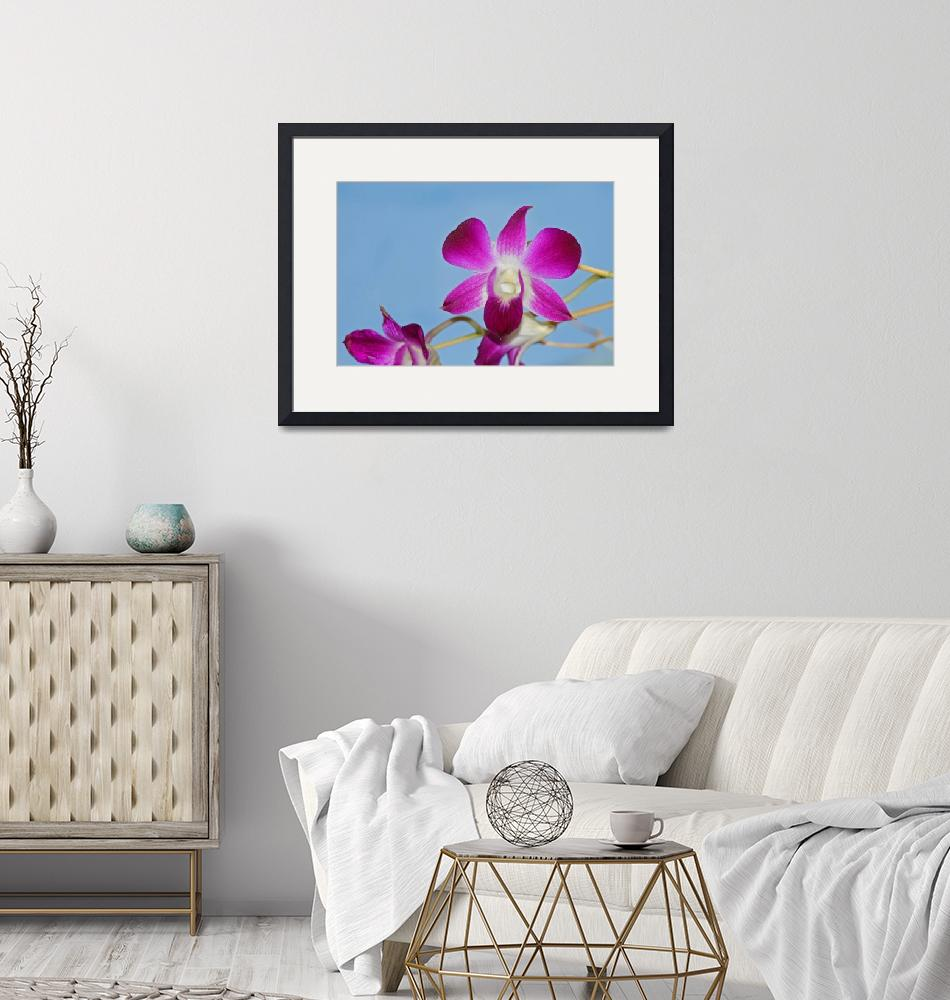 """""""Orchid with Blue Sky""""  (2013) by KsWorldArt"""