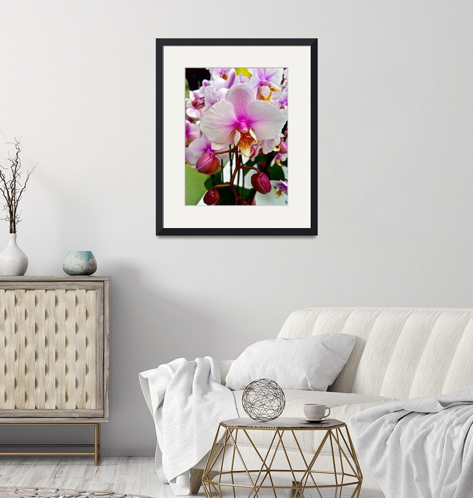"""""""orchids 3""""  by phototes"""