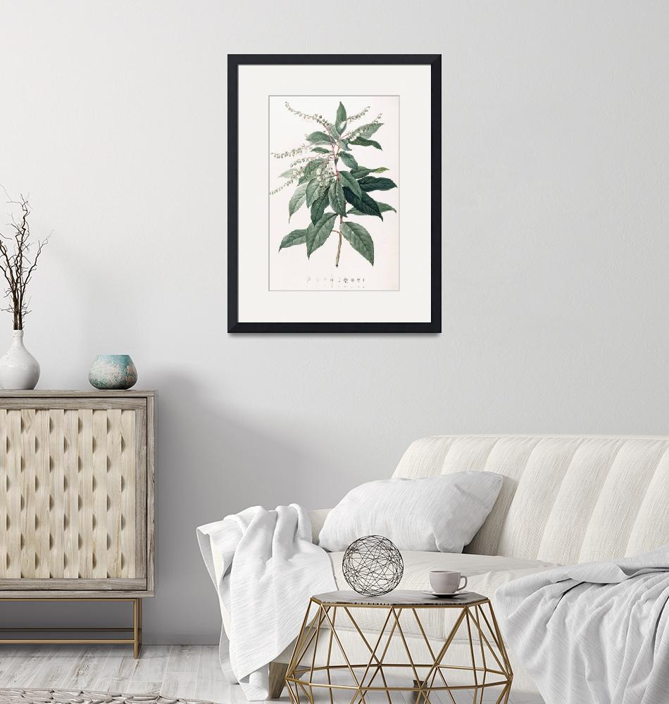 """""""Clethra Arborea (Lily of the Valley Tree)""""  by fineartmasters"""
