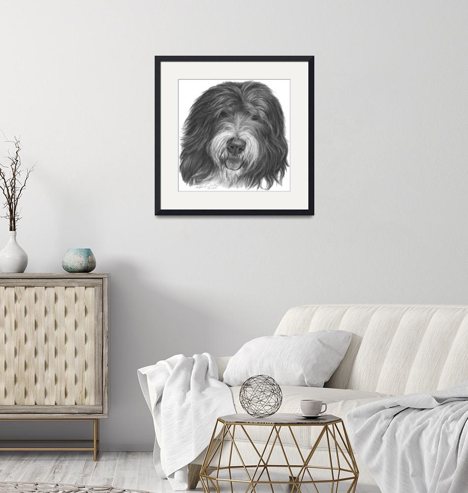 """""""Quincy, Old English Sheepdog""""  (2008) by sdonley"""