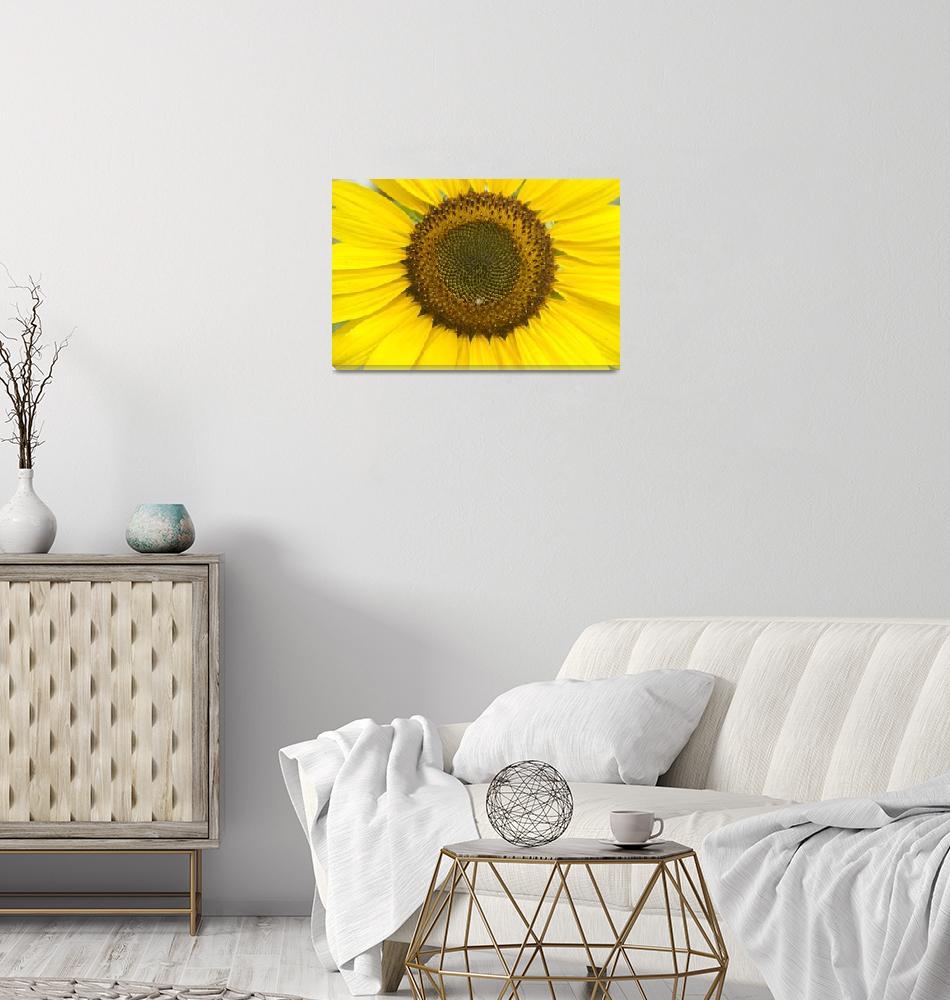 """""""Sunflower Center""""  (2011) by lightningman"""