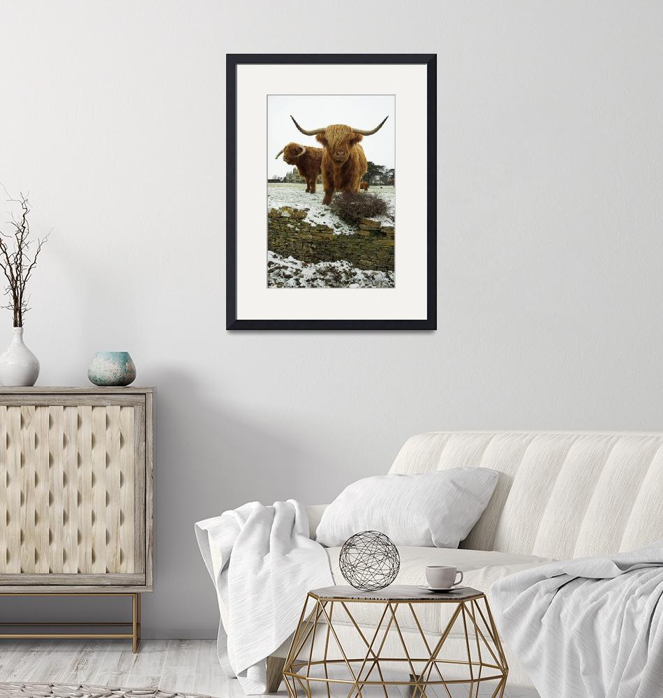 """""""Highland Cattle Duo""""  by shortwork"""