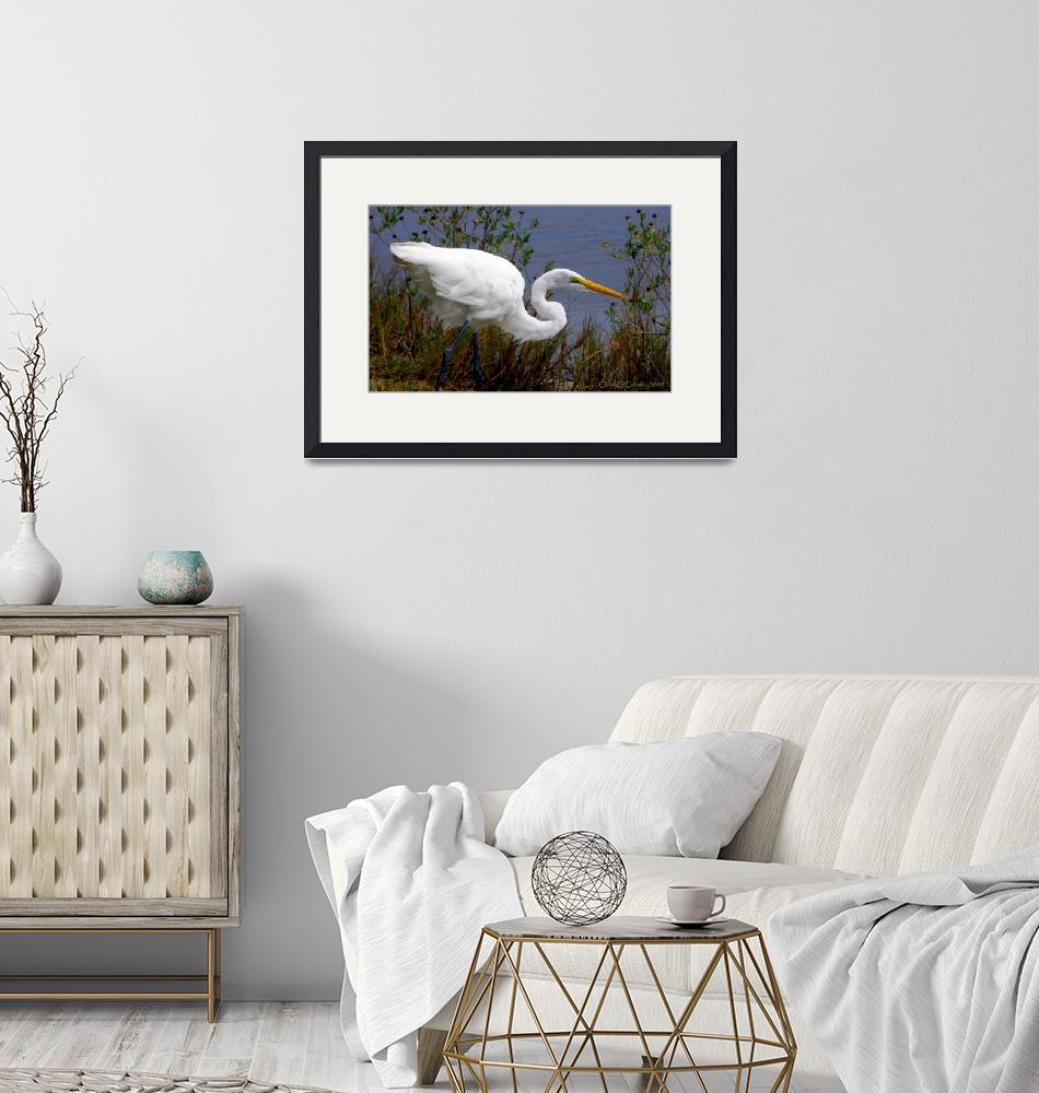 """""""""""Portrait of a Great Egret""""""""  (2009) by ChrisCrowley"""