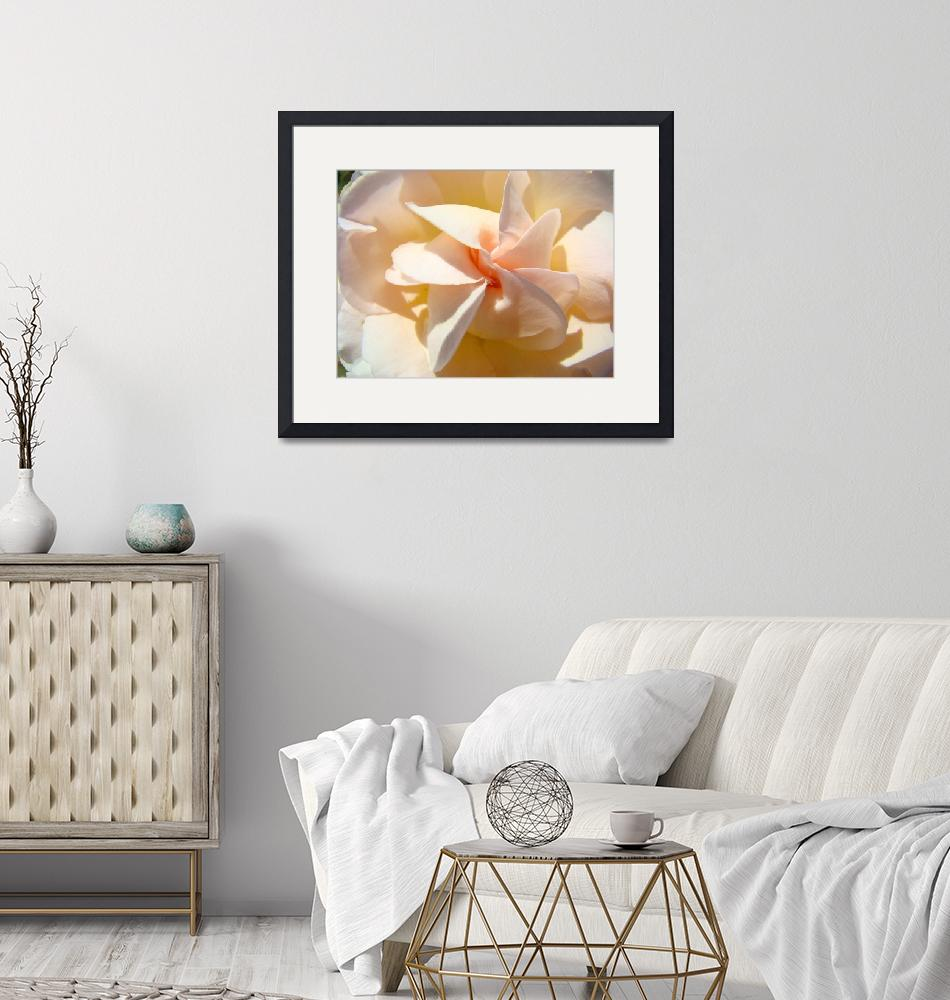 """Rose Flower Spiral art print Pastel Peach Roses""  (2010) by BasleeTroutman"