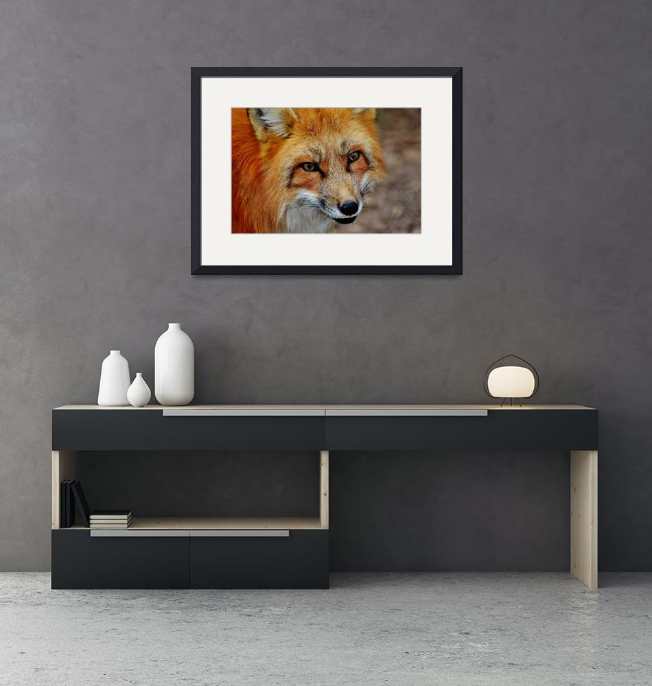 """Red Fox Wildlife Art Print""  (2016) by rogueart"