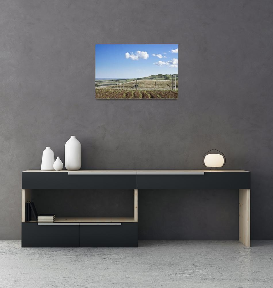 """skyline view of sugarcane field""  (2010) by Rajeshbac"