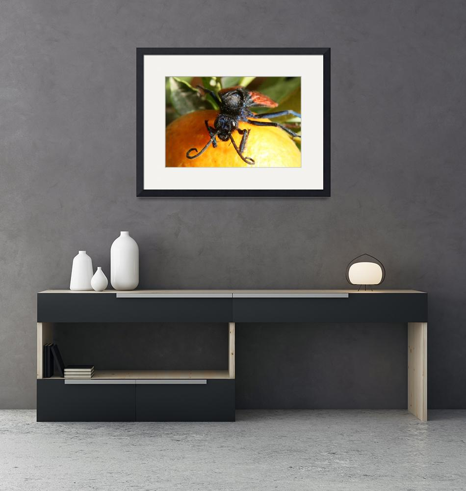 """Face of Tarantula Hawk Spider Wasp on Orange""  (2013) by rhamm"
