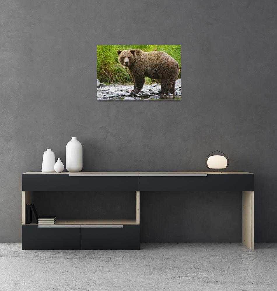 """""""An Adult Brown Bear Fishing In The Russian River,""""  by DesignPics"""